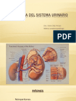 Histologia Del Sistema Urinario