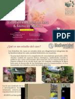 Estudios en Casos de Flora & Fauna de México