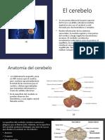 ponencia de cerebelo neuro sisis .pptx