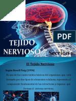Presentación Tejido Nervioso (1) (1)