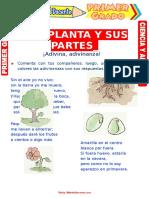 La Planta y Sus Partes Para Primer Grado de Primaria