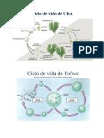 ciclos de vuda.docx