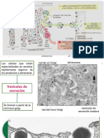 Trafico Vesicular Intracelular. Alberts Cap 13