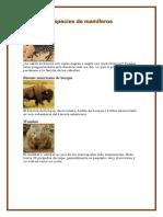 Especies de Mamíferos