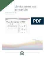 Localização dos genes nos mapas de restrição