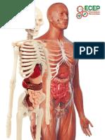 Guia Sistema Osteoarticular y Muscular