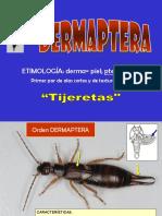 11 Dermaptera - Coleoptera