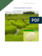 RA5980_guatemala_arroz.pdf