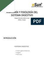 2 Anatomía Sistema Digestivo