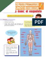 El Esqueleto Humano Para Segundo de Primaria