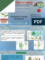 Morfología y Fisiología Vegetal Básica