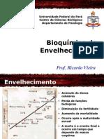 Bioquimica Do Envelhecimento