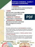 Tema 11 Corteza Cerebral