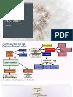 Neuroporo Anterior y Posterior