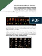 Qué Es Un Cariotipo y Como Esta Representado en Los Cromosomas