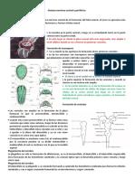 Sistema Nervioso Central y Periférico.docx Parte 1 y 2