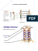 Médula Espinaly Columna Vertebral