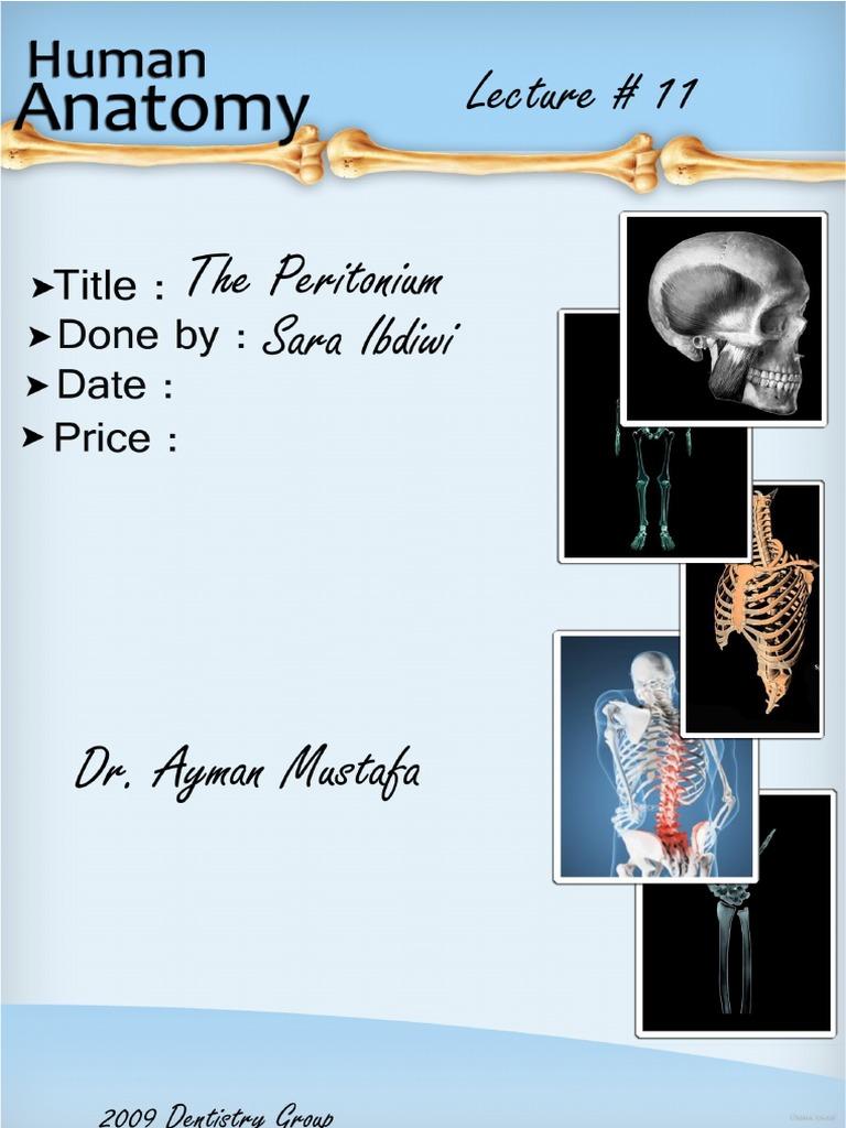 Anatomy Lecture 11 The Peritoneum Lecture Notes Peritoneum