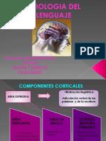 fisiologiadellenguaje-100518123548-phpapp02