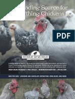 Chickenss – Nov 01, 2019