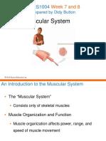 Week 8 Lec Part I and II Musc