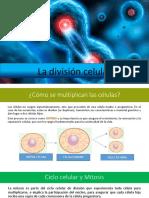 La División Celular PPT