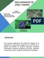 Bacterias Oxidantes de Hierro y Azufre (1)