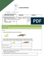 ornitorrinco texto informativo