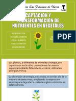 Captación y Transformación de Nutrientes en Vegetales