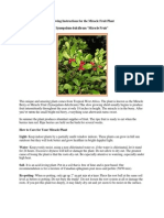Growing Instructions for the Miracle Fruit Plant