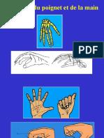 13- Main - Fractures - Panaris
