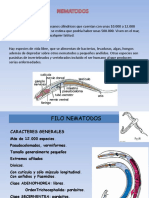 nematodos ascaris.pptx