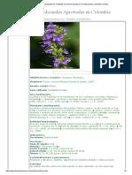 Plantas Aprobadas Por El Instituto Nacional de Vigilancia de Medicamentos y Alimentos (Invima)r