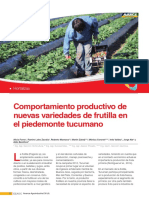 Comportamiento productivo de  nuevas variedades de frutilla