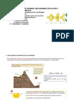Tema 6 Enzimas.pdf