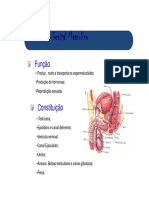 Aparelho Genital Masculino2.pdf