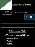 Sistema Nervoso Central Tornco Encefalico