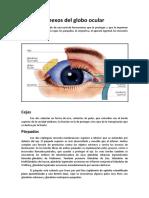 Anexos Del Globo Ocular y Medios Refringentes