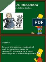 283331955 5 Genetica Mendeliana 2014 Ppt