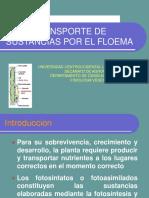 Transporte de Sustancias Por El Floema1