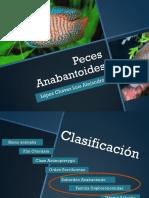 Los peces anabantidos.pdf