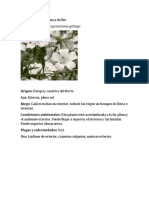 Fichas Tecnicas Plantas de Flor I