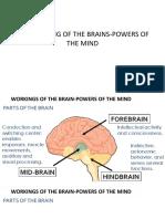 10 brain theory