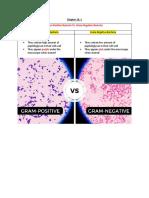 Gram Positive vs Gram Negative