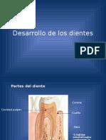 Desarrollo dental.pdf