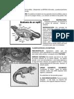 ANFIBIOS-Y-REPTILES-AVES.docx