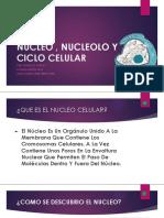 Nucleo , Nucleolo y Ciclo Celular