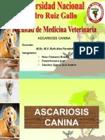 2.Ascariosis Canina