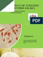 BIOENSAYO DE TOXICIDAD EN ARTEMIA SALINA L.pptx