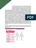 Dermatomas, Miotomas y Anamneis